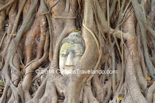 A famosa cabeça do Buda emaranhada nas raízes das árvores