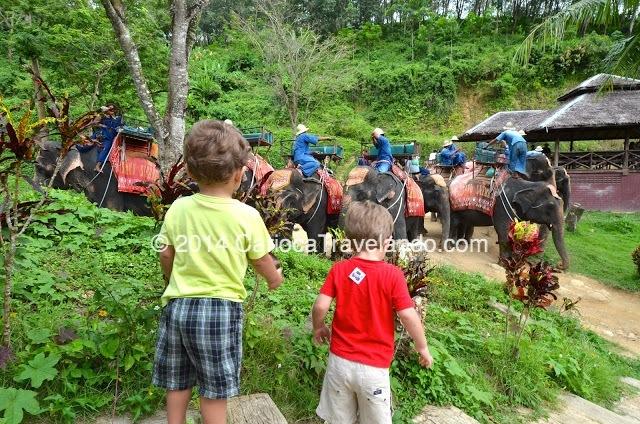 Os meninos ficaram encantados com os elefantes...