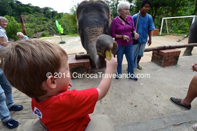 Dando bananas ao elefante... quem estava mais feliz?