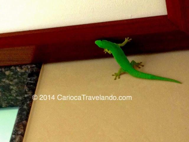 Ela era bem grande para a maioria das lagartixas que já vi no Brasil, e bem verdinha mesmo.