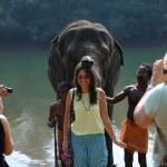 Kerala Elefantes